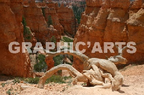 reproduction-photo-canyon-americain.jpg